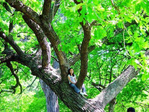 Laney in tree web